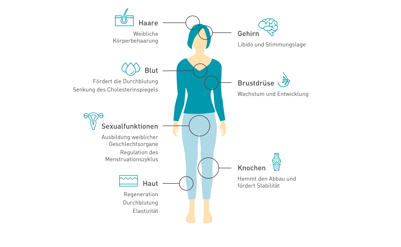 Übersicht der Funktionen von Östrogen im Körper.